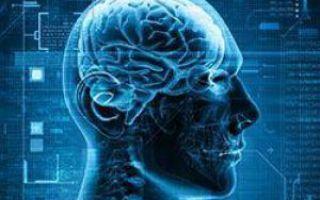 Что происходит в мозге геймера